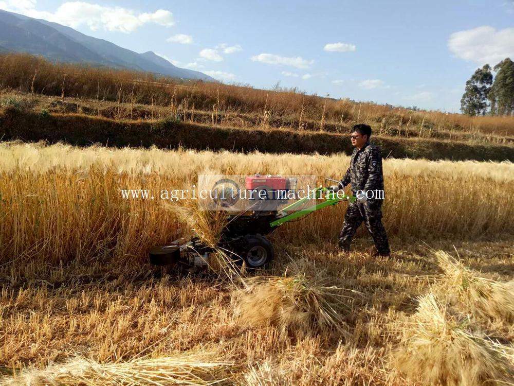 harvesting-rice10